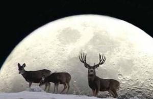 Buck Moon 2 (2)